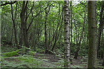 TQ5346 : Price's Wood by N Chadwick