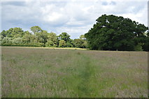 TQ5145 : Footpath through grass by N Chadwick