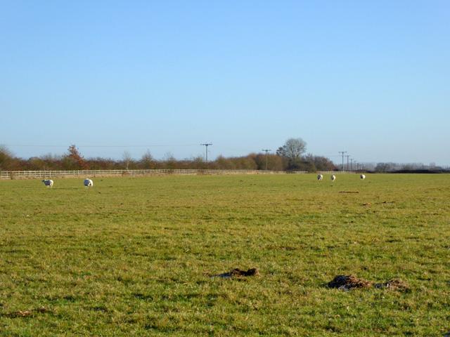 A few sheep in a field