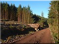 NS3482 : Forestry track and timber stack by Lairich Rig