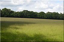TQ5246 : Meadow by Redleaf Wood by N Chadwick