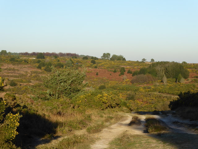 View from Camp Hill Clump, Ashdown Forest