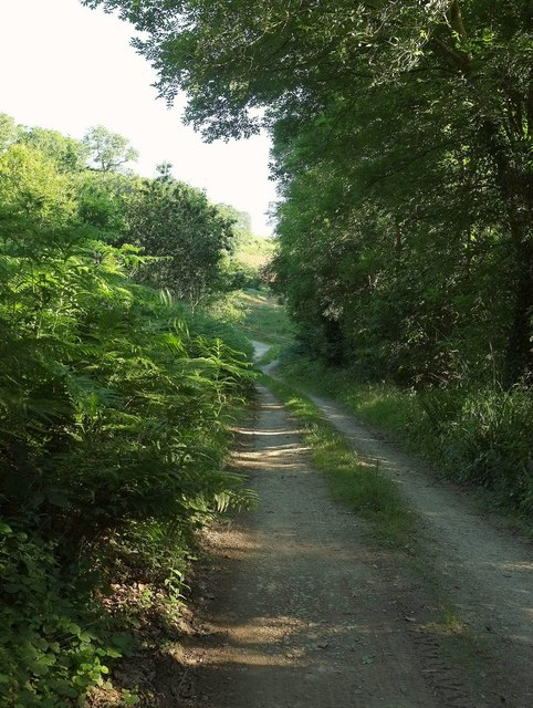 Track, Lamorran Wood