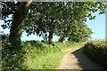 SW8742 : Laneside trees near Lamorran Wood by Derek Harper