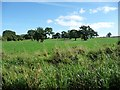 SJ5140 : Field full of trees, south-east of Blackoe Cottages by Christine Johnstone