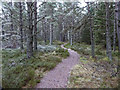 NH9919 : Path in Abernethy Forest by valenta