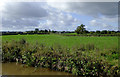 SJ6349 : Canalside pasture near Sound in Cheshire by Roger  Kidd
