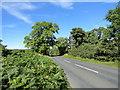 NZ0657 : Roadside trees by Robert Graham