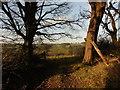ST3808 : View towards Purtington Copse by Roger Cornfoot