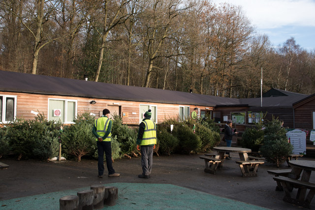 Christmas tree sales at Hamsterley Forest