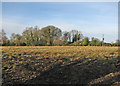 TL4346 : Thriplow Meadows by John Sutton