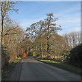 TL4346 : Thriplow: along School Lane by John Sutton