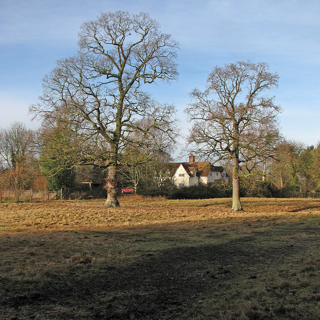 Fine trees on Thriplow Meadows