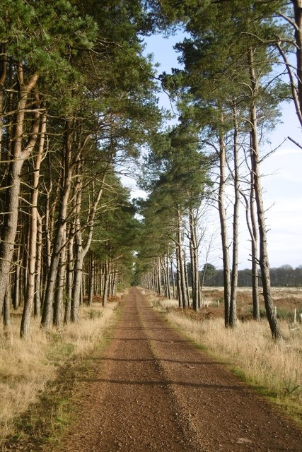 Road, Brownrig Wood by Richard Webb