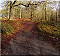SO6215 : Path into the Forest of Dean, Brierley by Jaggery