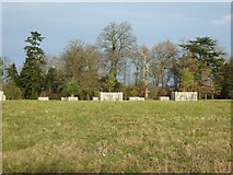 SO8844 : Trees in the Shrubbery in Croome Park by Philip Halling