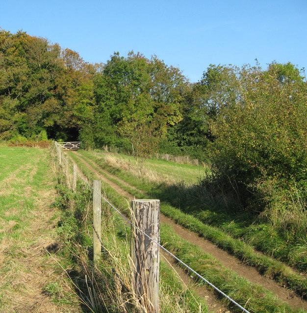 Longridge Wood - Painswick, Gloucestershire