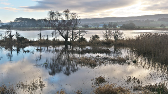 Complex water margin beside River Beauly