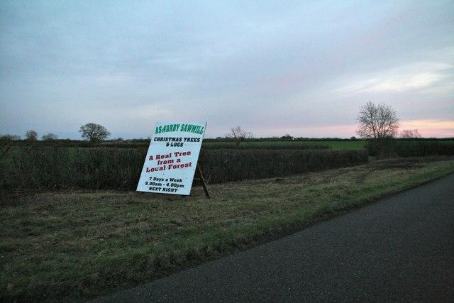 Christmas trees for sale, Mareham Lane, near Aswarby