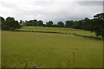TQ5346 : Meadow south of Cinder Hill Lane by N Chadwick