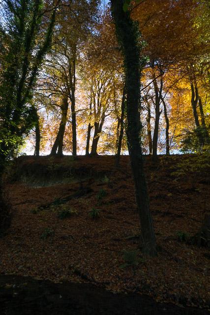 Autumn colours on bank at Ovington