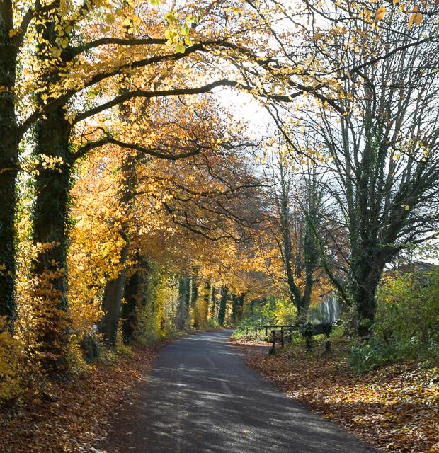 Autumn colours south of Ovington House