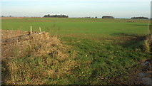 ST7879 : Arable land between Tormarton and Acton Turville by Derek Harper