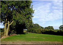 SJ6641 : Farmland and woodland south of Audlem, Cheshire by Roger  Kidd