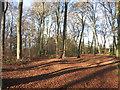 SU8298 : Grim's Ditch in the woods by Des Blenkinsopp