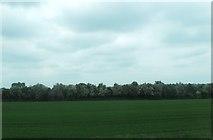 J1461 : Hawthorn shelter belt along the railway embankment north of the M1 by Eric Jones