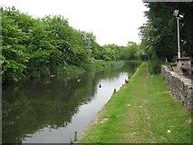 SK0300 : Ducks at Daw End - Walsall, West Midlands by Martin Richard Phelan