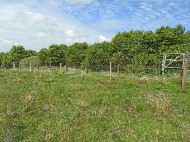 Badryrie Wood
