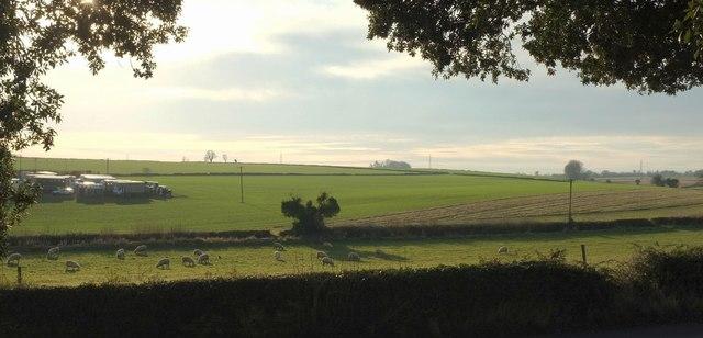 Farmland by Newhouse Farm