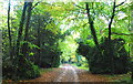 ST7982 : The Verge Wood, Badminton, Gloucestershire 2015 by Ray Bird