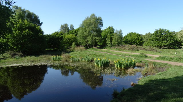 Pond on Cannock Chase, south of Milford Common, Staffs