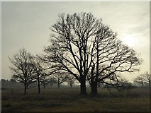 SO8844 : Trees silhouetted by the winter sun by Philip Halling