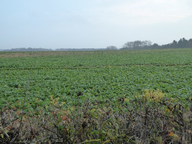 Arable field at Croome