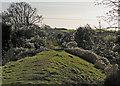 TL5454 : Old man's beard on Fleam Dyke by John Sutton