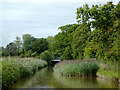 SJ5446 : Reed bed in the canal near Willey Moor, Cheshire by Roger  Kidd