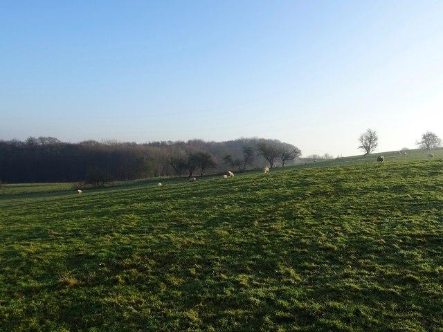 Ridge and furrow field at Champion Carr