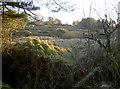 ST5450 : Gruffy ground at St Cuthbert's by Neil Owen