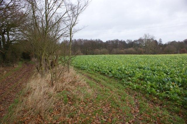 Farmland near Hubbard's Hall Farm