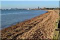 SU4409 : Along the beach at Weston by David Martin
