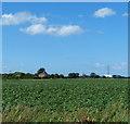 TF4405 : Flat farmland west of Friday Bridge by Mat Fascione