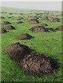 SK2784 : Molehills on Rud Hill by Neil Theasby