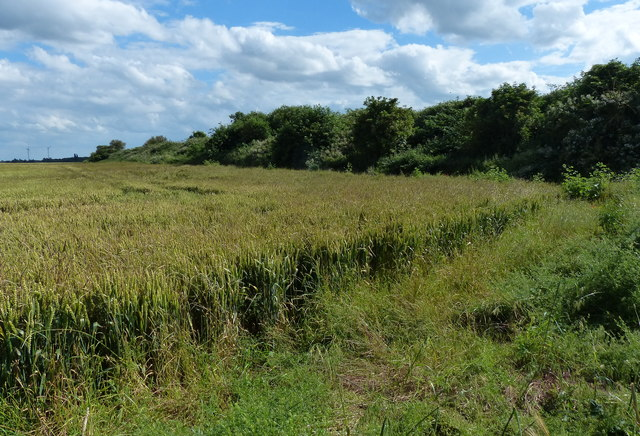 Former March to Spalding railway embankment