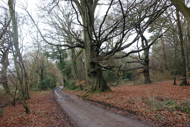 Bridlepath along the southern edge of Highmoor Common