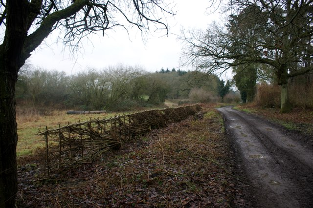 Newly-laid hedge, Merrimoles Estate
