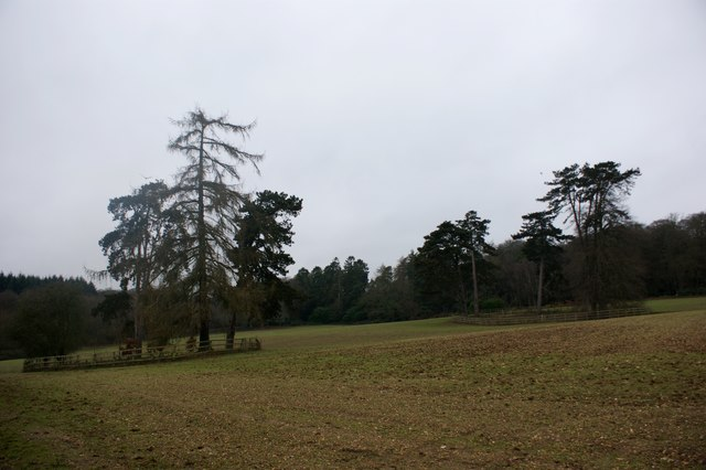 Clumps of trees near Scaffold Wood
