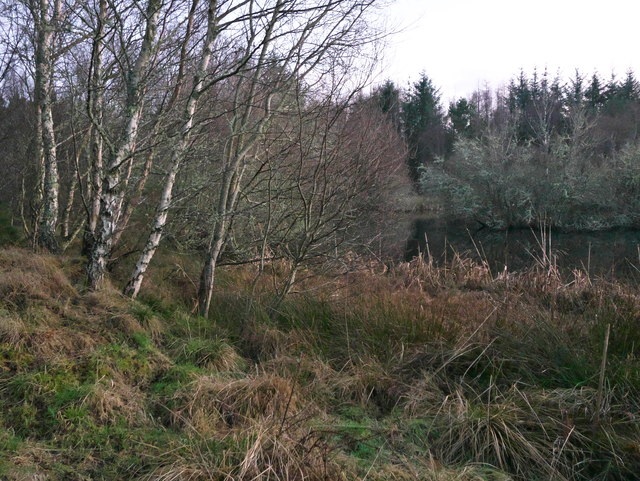 By the tarn in Arkendeith Wood
